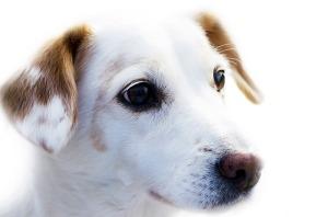 Hund Blog Substanz