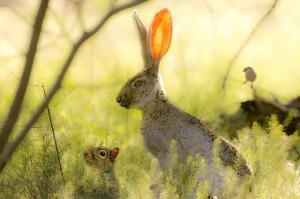 Hase, Hörnchen und Vogel im lichten Frühlingswald