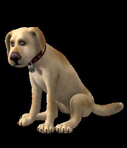 Hund, sitzend, Blog, Substanz zu Galgenhumor